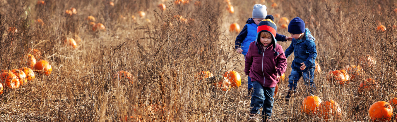 Pumpkin Picking in Fall in Barrie
