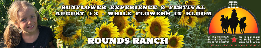Little girl in sunflower field smiling, rounds ranch logo on right with sunflower festival text in white centered