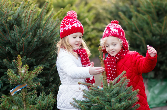 Christmas markets - kids picking trees