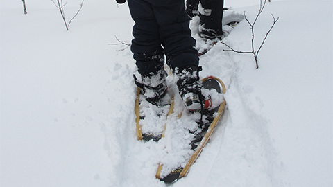 Snowshoe_Resized