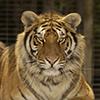 Elmvale Jungle Zoo