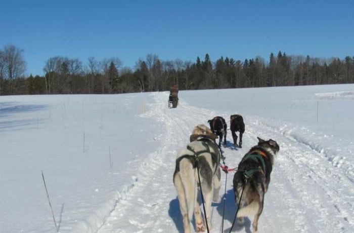 Dog Sledding Barrie Region