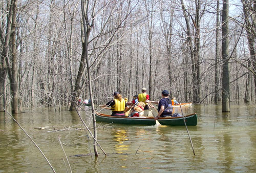 Canoeing in Minesing Swamp