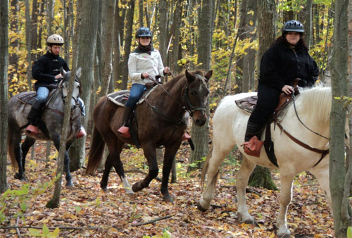 Horseback Riding, Barrie, Ontario